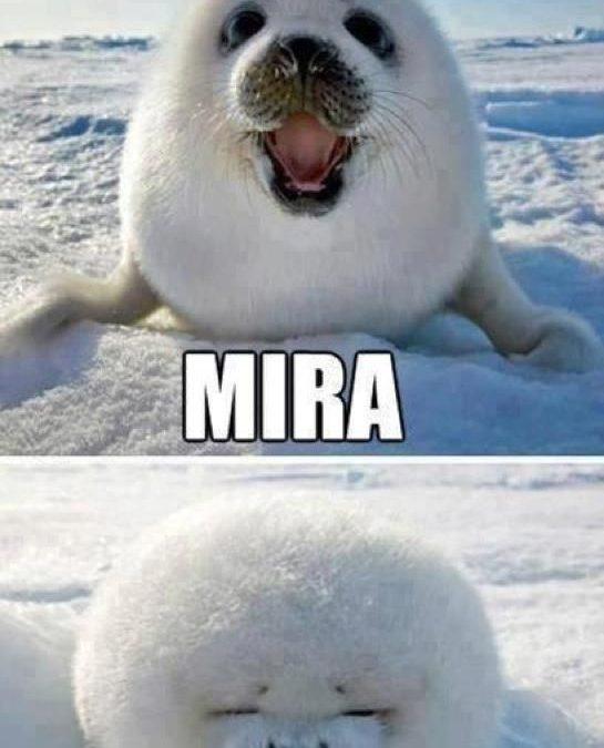 Mira, soy una bola de nieve!