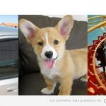 Realidad perruna VS humana: el caso de la ventanilla de coche