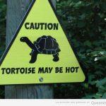Atención! Las tortugas pueden quemar