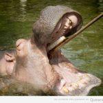Venga, Hippo, hora de lavarse los dientes