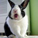 Conejos enfurecidos