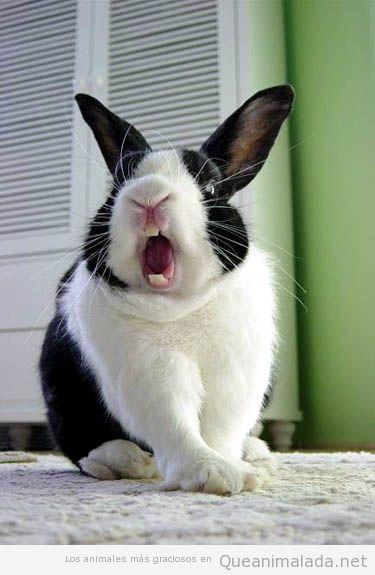 Imagen graciosa de un conejo que parece enfadado