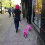 Tampo hacía falta que tus perros fuesen a conjunto contigo...
