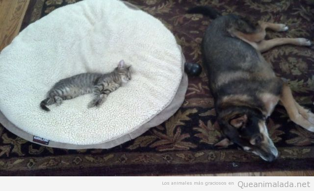 Quien tenga un gato y un perro, sabe que esto es verdad