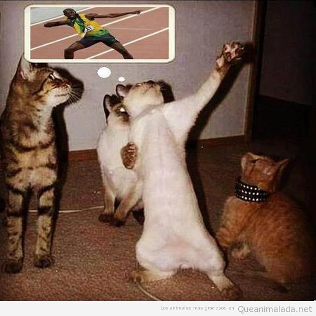 Mira, soy Bolt!