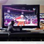 Mi gato no se pierde ni un minuto de los Juegos Olímpicos