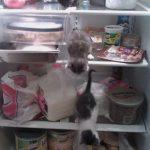 Gatitos y su obsesión con las neveras