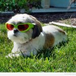 El perro más chulo del vecindario