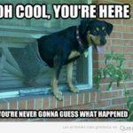 Perros dándote la bienvenida a través de la ventana