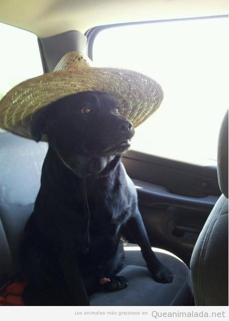 Foto divertida de perro con sombrero de paja