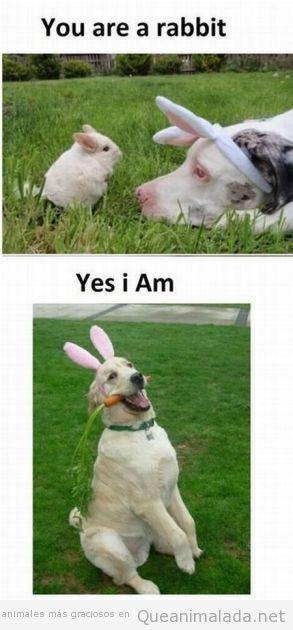 Perro disfrazado de conejo