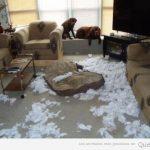 Cosas que hacen tus perros cuando se quedan solos en casa
