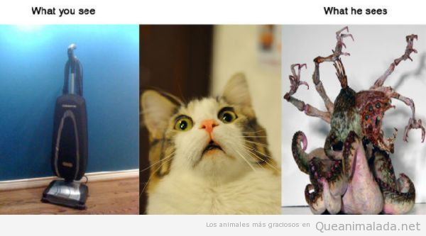 Donde tu ves una aspiradora, tu gato ve…