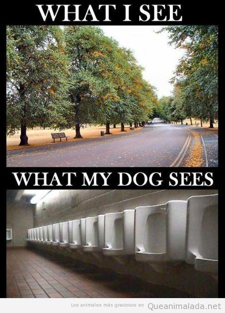 Diferencia de visión entre personas y perros, yo veo una calle, ellos ven un urinario