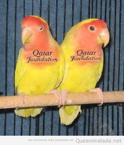 Dos loros naranjas y amarillos que parecen la segunda equipación del Barça