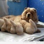 La foto tierna del día: cuatro culitos muy peluditos