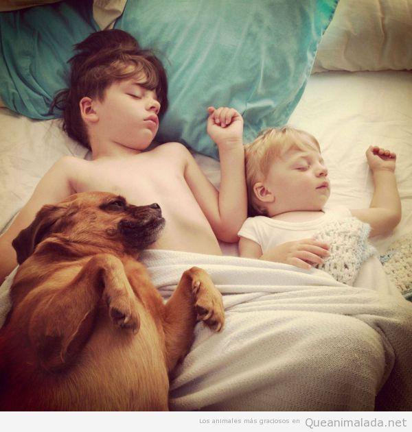 Imagen tierna y bonita de dos niños duermiendo con un perro