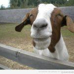La cara de cuando te dicen: ¡qué guapo estás hoy!