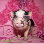 Te gustan mis gafas de sol, baby?