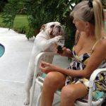 Bulldogs y sus fiestas salvajes en la piscina...