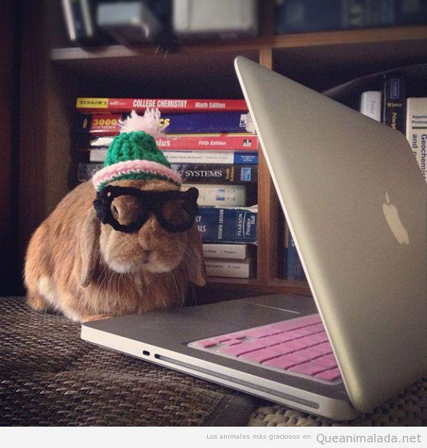 Foto chistosa de un conejo con gafas y gorro de crochet en el ordenador