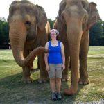 Elefantes que saben mucho o demasiao…