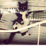 Cosas que hace tu gato cuando no estás en casa