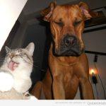 Otra vez está tu gato burlándose de tu perro…