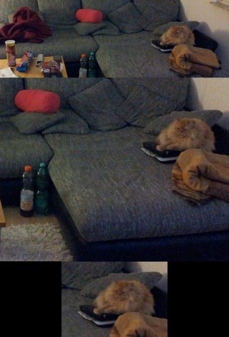 No había otro sitio e el sofá para sentarse, no…