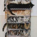 Para que tengas a tus gatos bien ordenaditos