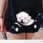 Perros de bolsillo, literalmente