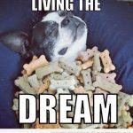 Perro viviendo el sueño!