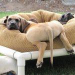 Perros que se tumban en la cama muy a lo freestyle