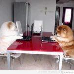 Oficina Chow Chow, dígame?