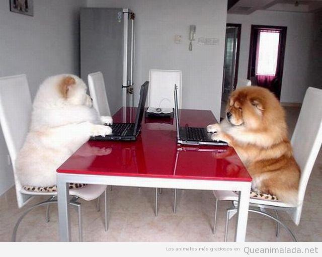 Perros trabajando en un ordenador