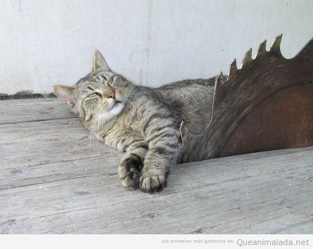A los gatos les gusta el peligro..