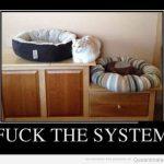 RT si tu gato también es un antisistema
