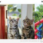 Lo que tú gato vee VS lo que tú ves: las cortinas de casa