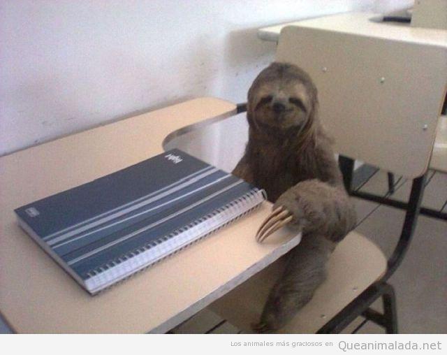 Oso perezoso contento estudiando en clase