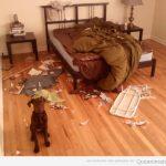 Fechorías que hace tu perro cuando no estás en casa...