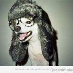 Este tiene que ser el perro de Mario Vaquerizo...
