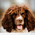 Este tiene que ser el perro de Carles Puyol...