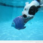 Menos mal que el pez era de peluche...