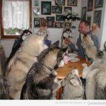 Hora de cenar, chicos!