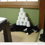 Cómo trollear al vago de tu gato mientras duerme