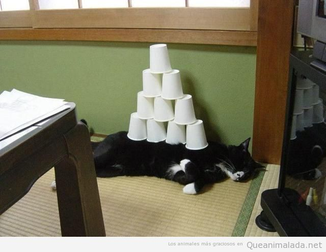 Foto graciosa de una pirámide de vasos sobre un gato dormido