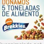 Campaña de donación de alimentos a mascotas sin hogar