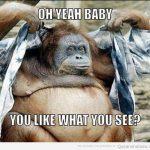 Oh yeah, baby, ¿te gusta lo que ves?