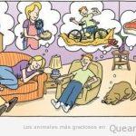Con qué sueñan los gatos?
