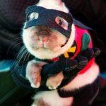 Robin, de Bartman, versión conejo